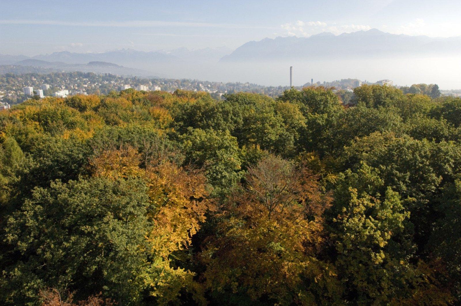 Panoramic Stroll in Lausanne, Geneva